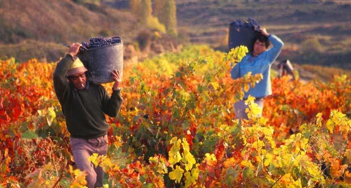 Badarán, pueblo viticultor